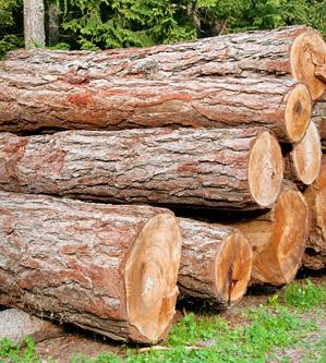 villars-travaux-forestiers-gryon-abattage