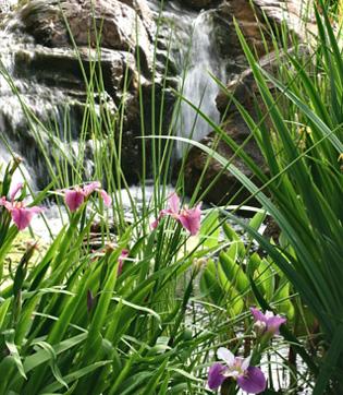 ruisseau-et-iris
